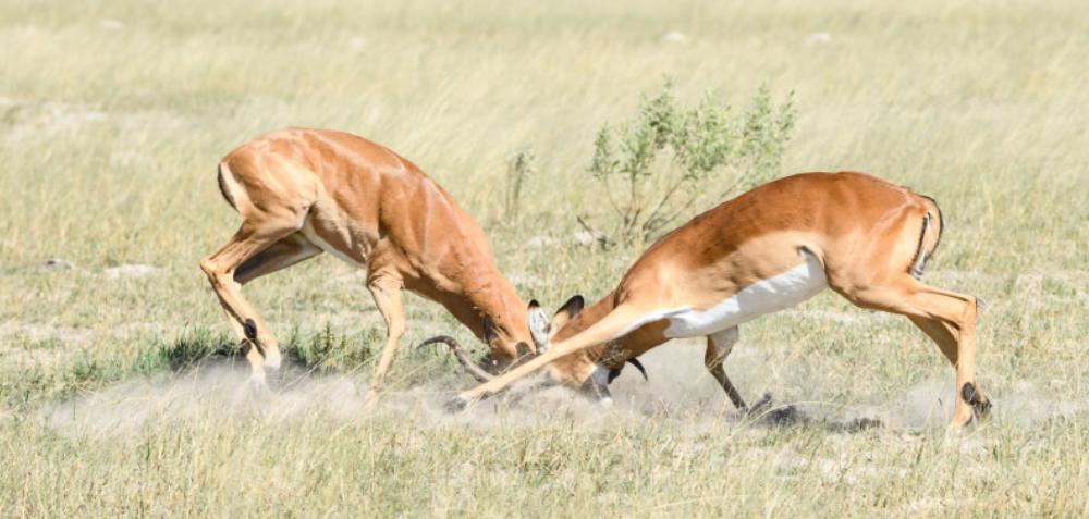 Fotoreise Botswana