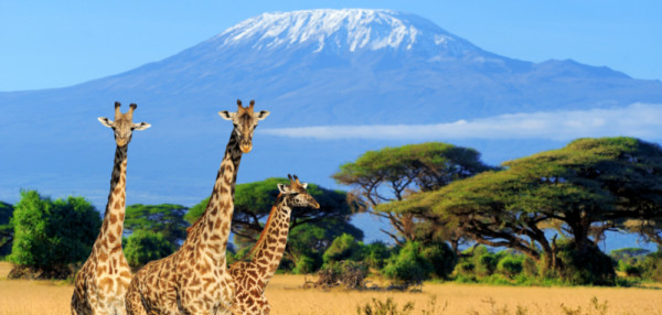Kilimanjaro, Safari, Sansibar