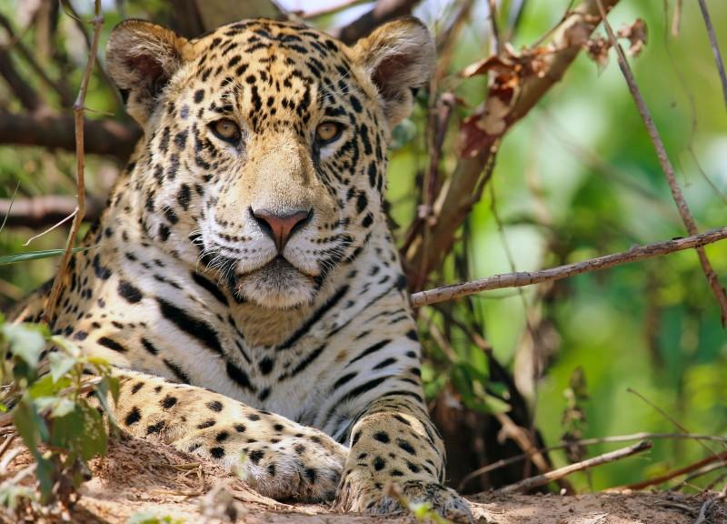 Naturreise und Regenwaldexpedition