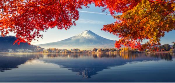 Zur Kirschblüte durch Japan