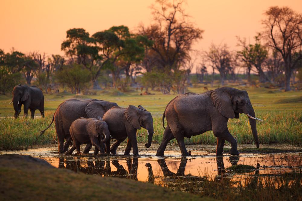 Erlebnisreisen Safaris Afrika